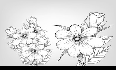 yellow Magnolia flowers drawing and sketch with line-art on white backgrounds