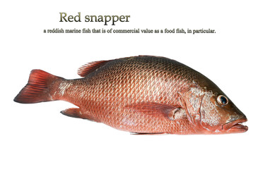 A Red snapper
