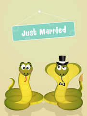 Wedding of snakes