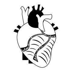 human heart icon image