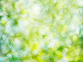 Green abstract nature bokeh background