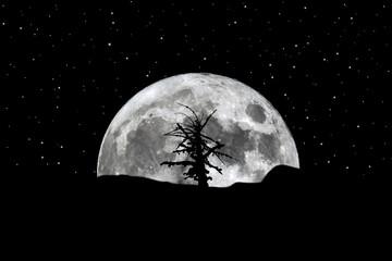 Full moon rising silhouette tree stars