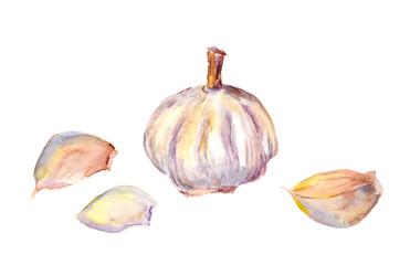 Watercolor painting - garlic bulb