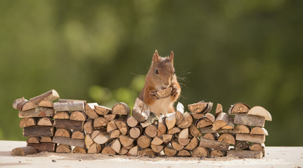 squirrel holding a piece of firewood