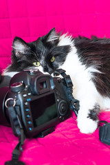 Black and white cat lying on the photo camera