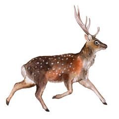 Spotted deer on white background. watercolor. Illustration. Template