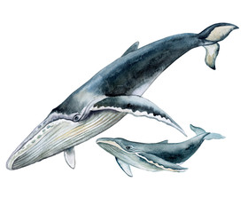 Humpback whale with baby. Underwater fauna. Watercolor illustration.
