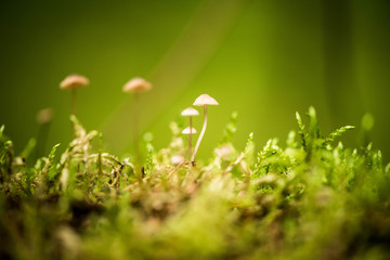 Forest mushrooms not edible grow in moss