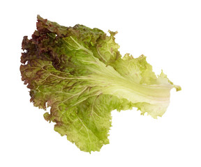 A single red leaf lettuce isolated on a white background.