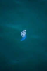 Floating Blue Glove in the Deep Blue Sea