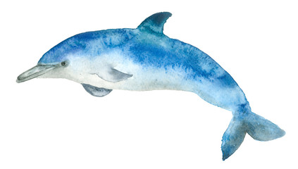 Watercolor blue dolphin