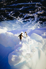 Two Adelie Penguins standing on ice floe