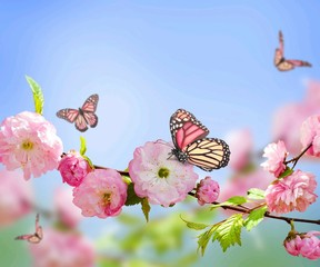 Pink butterfly on pink flower,