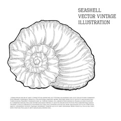 Seashell. Vector vintage illustration stylized as hand-drawn sketch graphic with hatching