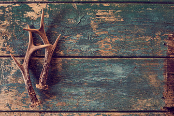 Seasonal stag antlers on rustic timber background