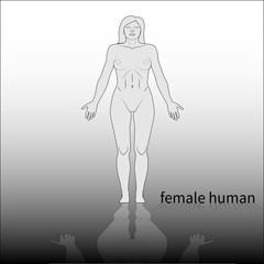 adult female human body model front side
