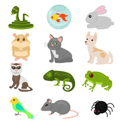 Vector illustration of home pets set isolated on white background, cat dog parrot goldfish, amphibian,hamster, insects, bird in cartoon flat style.