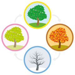 Tree throughout the course of a year with different foliage in typical colors and shades - spring, summer, autumn and winter arranged in a circle. Vector illustration.