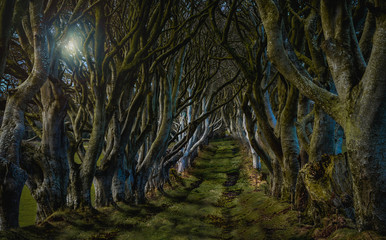"""""""The Kingsroad"""" from Game of Thrones.  In reality this is a tree-lined road called """"The Dark Hedges"""" in Northern Ireland"""