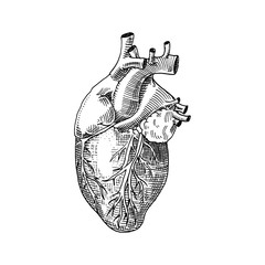 Human biology, organs anatomy illustration. engraved hand drawn in old sketch and vintage style. body detailed heart or soul.