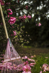Pink rake underneath a magnolia tree in the front yard of a farmhouse in Oregon