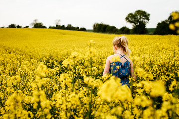 A little girl walking through a field of rape