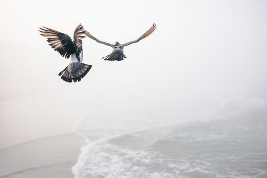 Pigeons take flight from pier on foggy morning.