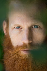 Portrait of Man with red beard