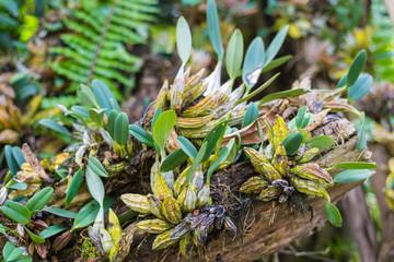 Garden ornamental plants in tropical jungle style