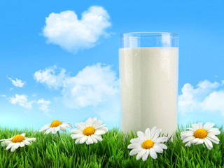 Glass of milk in the grass with daisies and blue sky