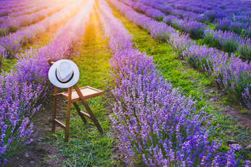 A chair with a hanged over hat between the blooming lavender rows under the summer sunset rays. Dream and relax concept.