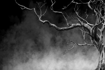 Old Big Giant Tree alone on fog and smoke background, Black and White Color