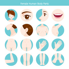 Female Human External Organs Body Set, Physiology, Structure, Medical Profession, Morphology, Healthy