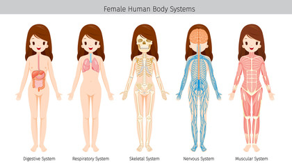Female Human Anatomy, Body Systems, Physiology, Structure, Medical Profession, Morphology, Healthy