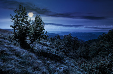 forest on a mountain slope at night