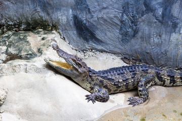Crocodile Farm : 動物・クロコダイル・ワニ