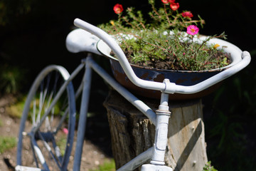 Garden flowers and an old bicycle