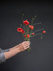Frau hält Mohnblumen in der Hand