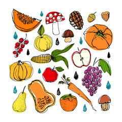 Set of different autumn vegetables and objects. Hand drawn colored vector image. Pumpkin, mashroom, apple, pear, carrot etc.