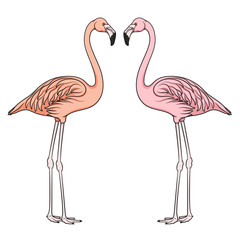 Color vector image of flamingo. Isolated object on white background.