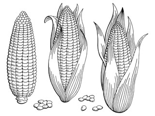 Corn graphic black white isolated sketch illustration vector