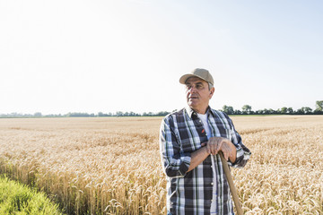 Senior farmer standing in front of wheat field watching something