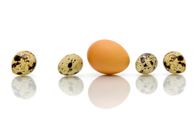 Eggs of different types on a white background