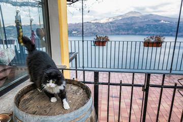 Cat on the barrel at streets of Castel Gandolfo, Italy.