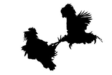 cocks that fight black on white