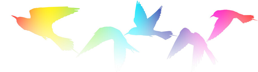 Creative approach colored silhouettes of birds on white