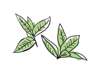 Green tea hand drawn icon isolated on white background vector illustration. Indian ethnic culture element.