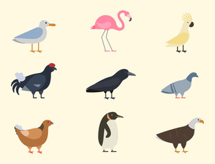 Bird species collection different vector illustration wild animal characters avifauna tropical feather pets