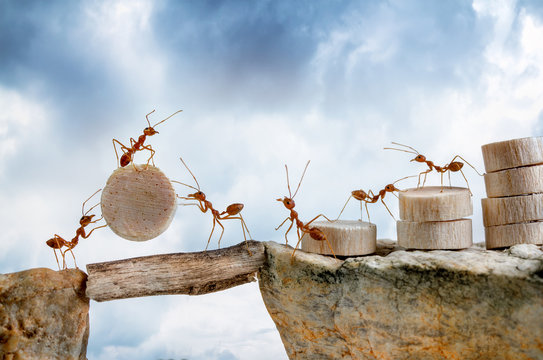 Ants carrying wood crossing cliff, teamwork concept