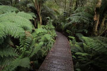 Wanderweg in Otway NP in Australien